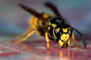 Eşek arısı İlaçlama