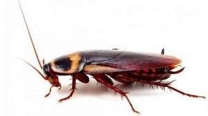 Hamam Böceği İlaçlama