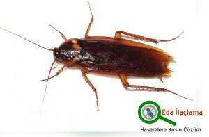 eda böcek ilaçlama