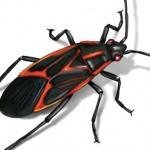 En İyi Böcek İlaçlama Firmaları