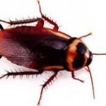 Garantili Böcek İlaçlama