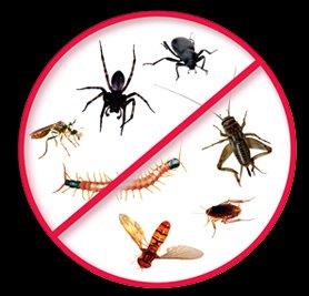 garantili böcek