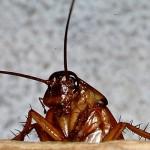 Kalorifer Böceği İlaçlama Şirketleri