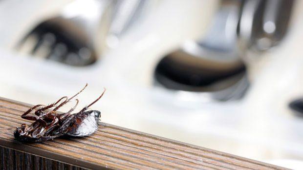 Hamam Böceğini Nasıl Yok Ederiz ?