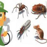 Sağlık Bakanlığı Onaylı Böcek İlaçlama